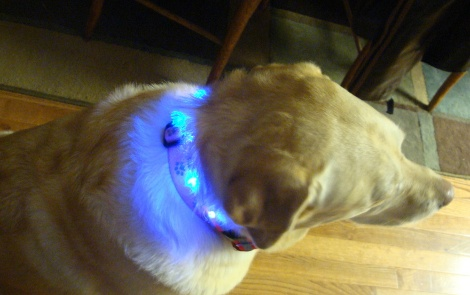 LED pet collar 021<br><img src='/upfile/product/20120203045054.jpg' onload='javascript:DrawImageim(this);' />